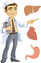 Cute  doctor - indicating that the liver, heart, s Stock Photo