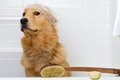 Cute dog apprehensive about a bath Royalty Free Stock Photography