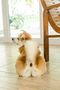 Cute dog from the backside Royalty Free Stock Photo