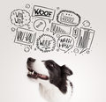 Cute dog with barking bubbles black and white border collie speech above her head Royalty Free Stock Photos