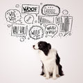 Cute dog with barking bubbles black and white border collie speech above her head Stock Image