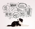 Cute dog with barking bubbles black and white border collie speech above her head Royalty Free Stock Photography