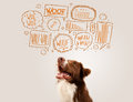 Cute dog with barking bubbles brown and white border collie speech above his head Royalty Free Stock Photo