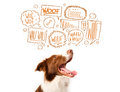 Cute dog with barking bubbles brown and white border collie speech above his head Royalty Free Stock Photos