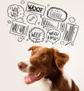 Cute dog with barking bubbles brown and white border collie speech above his head Stock Images