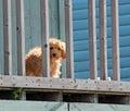 Cute dog behind bars Royalty Free Stock Photo