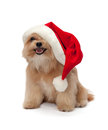 Cute dog in christmas hat mixed breed isolated white background with clipping path Stock Photography