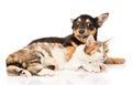 Cute dog embracing cat isolated on white background Royalty Free Stock Image