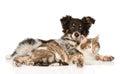 Cute dog embracing cat on white background Stock Photo