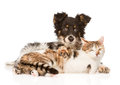 Cute dog embracing cat on white background Royalty Free Stock Photo