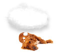 Cute dog with empty cloud bubble Royalty Free Stock Photo