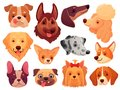 Cute dog face. Puppy pets, dogs animals breed and puppies heads vector illustration set