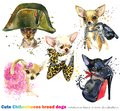 Cute dog with fashion accessories set. domestic animal watercolor illustration.