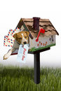 Cute dog in garden mailbox with past due letter in mouth white background Stock Images