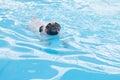 A cute dog pug swim at a local public pool float puppy Stock Photo