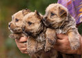 Cute dog puppies Stock Image