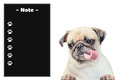 Cute dog puppy pug with black board memo note on white Royalty Free Stock Photo