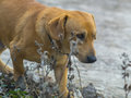 Cute dog runs somewhere close up Royalty Free Stock Photo