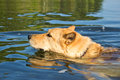 Cute dog swimming in water Stock Photo
