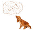 Cute dog with thought bubble thinking about a bone cocker spaniel sitting and dreaming in Royalty Free Stock Image
