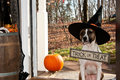 Cute dog trick or treating a on halloween Royalty Free Stock Photos