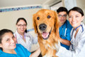 Cute dog at the vet with a group of doctors and assistants Royalty Free Stock Photos