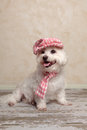 Cute dog wearing hat and scarf Royalty Free Stock Photo