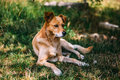Cute doggie mongrel sits on the grass Royalty Free Stock Photo