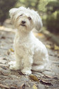 Cute doggy resting in a park white small sitting Royalty Free Stock Photos