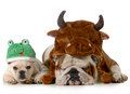 Cute dogs Royalty Free Stock Photo