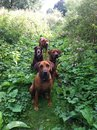 Cute dogs in green meadow sitting and standing posed for the picture Royalty Free Stock Images