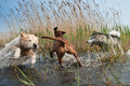 Cute dogs having fun Stock Photography