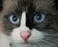Cute domestic cat Royalty Free Stock Photo
