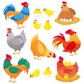 Cute domestic chicken. Farm breeding hen, poultry rooster and chickens with chick. Hens cartoon vector set