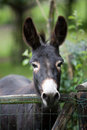 Cute donkey Royalty Free Stock Photography
