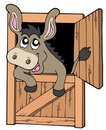 Cute donkey in stable Stock Image