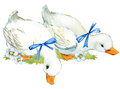 Cute duck. domestic farm bird watercolor illustration.
