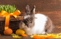Cute easter bunny with orange eggs Stock Photo