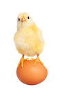 Cute easter chick with egg Royalty Free Stock Photo