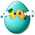 Cute easter chicks in egg shell