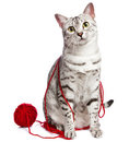 Cute Egyptian Mau with yarn wrapped around her Stock Photography