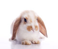 Cute fancy rabbit Royalty Free Stock Images