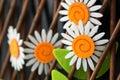Cute felt craft daisies wooden trellis fence still life photograph Stock Image