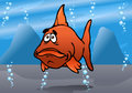 The cute fish red bash Royalty Free Stock Photos