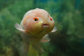 Cute fish very like nimo baby Royalty Free Stock Photography