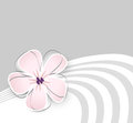 Cute flower background soft pink against light grey Royalty Free Stock Photos