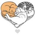 Cute Fluffy Cats.