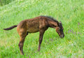 Cute foal on a spring pasture Stock Photo