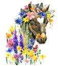 Cute foal watercolor illustration. farm animal