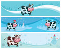 Cute friendly cows banners Royalty Free Stock Photography